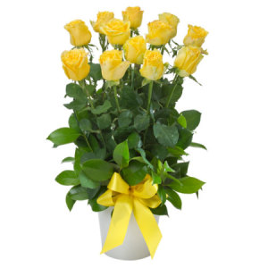 12 Yellow roses impulse 254