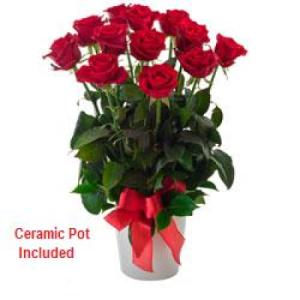Impulse 252- 12 stems red roses in ceramic vase
