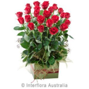 Now & forever 220- 24 long stem red roses in upright box