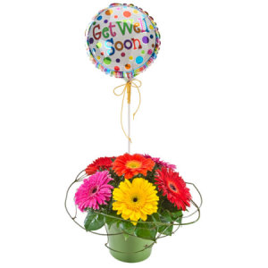 Rainbow Get well Soon 339 Gerberas arrangement