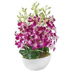 Elle SA171- Singapore orchids in a ceramic container