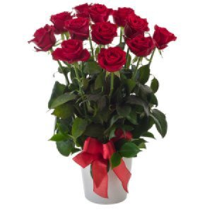 Red roses Impulse 252