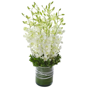 Orchid Presentation in glass vase Virtue 278