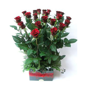 Red roses Medium length in box