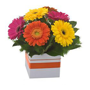 Mixed Gerbera box 500